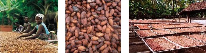 Cacaobonen productie van Fairtrade chocolade